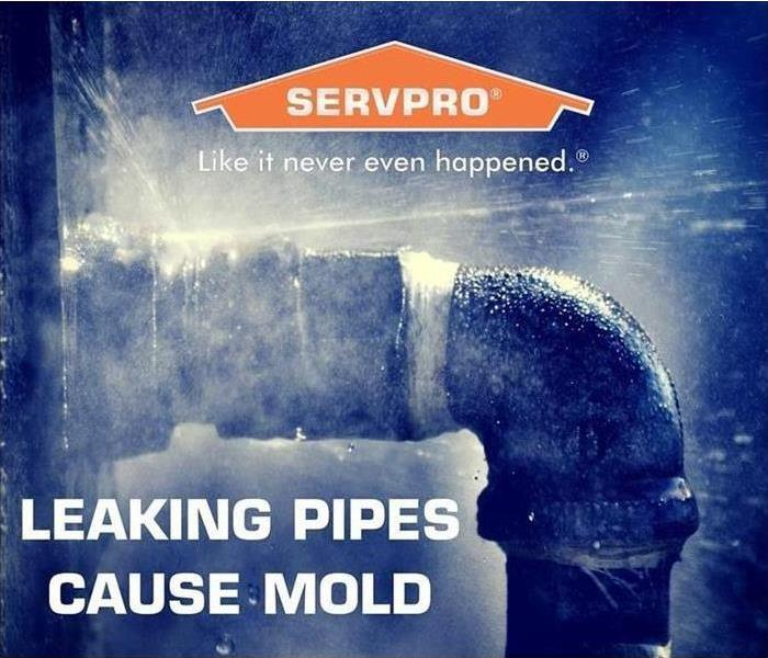 PSA: Leaking Pipes Cause Mold
